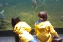 Aqua Sealife
