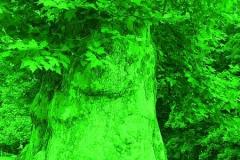 Grüne City